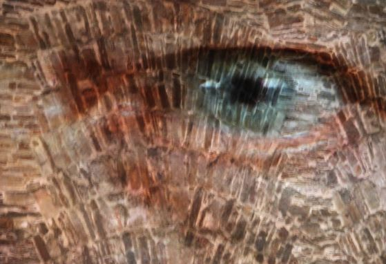 Augenspiel (Foto A. Illhardt)